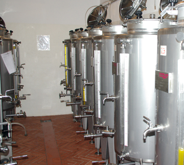 Olive Oil Process